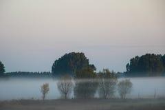 在草甸的树的之间雾 库存图片