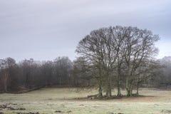 在草甸的树群 免版税库存图片