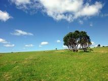 在草甸的树 免版税库存照片