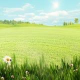 在草甸的梦想的下午 免版税库存照片