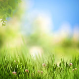 在草甸的梦想的下午 图库摄影