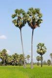 在草甸的棕榈树 库存照片