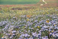 在草甸的王尔德花 库存照片