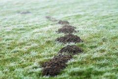 在草甸的痣小山 库存图片