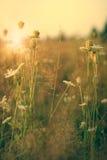 在草甸的秀丽野花 免版税图库摄影