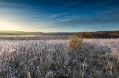 在草甸的秋季冷淡的早晨 库存照片