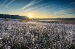 在草甸的秋季冷淡的早晨 免版税库存图片