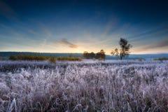 在草甸的秋季冷淡的早晨 免版税库存照片