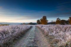 在草甸的秋季冷淡的早晨 免版税图库摄影