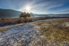 在草甸的秋季冷的早晨有树冰的 库存照片