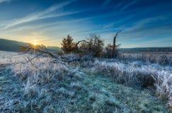 在草甸的秋季冷的早晨有树冰的 库存图片