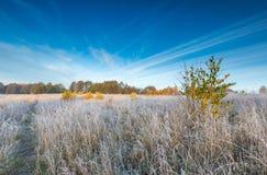 在草甸的秋季冷的早晨有树冰的 免版税库存图片