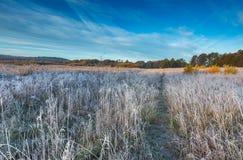 在草甸的秋季冷的早晨有树冰的 图库摄影
