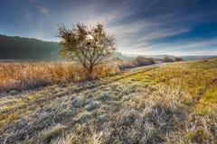 在草甸的秋季冷的早晨 图库摄影