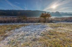 在草甸的秋季冷的早晨 库存图片