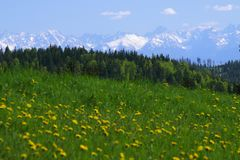 在草甸的积雪的Tatra山 免版税库存照片