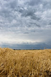 在草甸的秸杆 夏天暴风云 粮食作物,收获 免版税库存图片