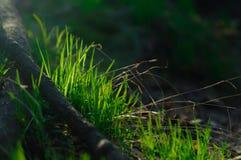 在草甸的绿草灌木 库存图片