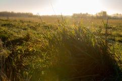 在草甸的草皮 免版税库存图片