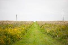 在草甸的草道路 免版税库存图片