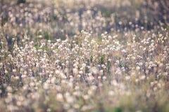 在草甸的蒲公英 免版税库存照片