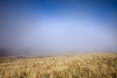在草甸的薄雾 免版税库存照片