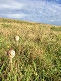 在草甸的蘑菇 免版税库存图片