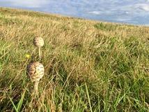 在草甸的蘑菇 库存图片