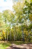 在草甸的路在桦树树丛里在森林里 免版税库存图片