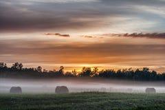 在草甸的雾传送带 库存图片