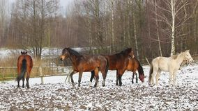 在草甸的马 股票视频