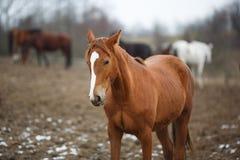 在草甸的马 免版税库存图片