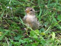 在草甸的鸟 免版税库存图片