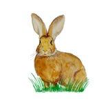 在草甸的水彩兔宝宝 免版税库存照片