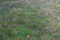 在草甸的冻早晨露水 库存图片