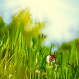 在草甸的晴朗的夏日 免版税库存图片