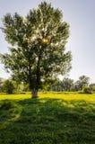 在草甸的结构树 免版税库存照片