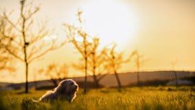 在草甸的滑稽的狗 图库摄影