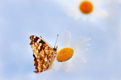 在草甸的Butterflie 库存图片