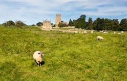 在草甸间的教会圣詹姆斯切削的Campden 免版税图库摄影