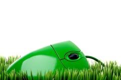 在草的一个绿色计算机鼠标 库存照片