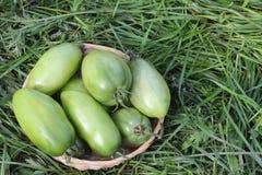在草的一个wattled篮子的绿色蕃茄 库存照片