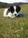 在草的一只逗人喜爱的小狗 图库摄影