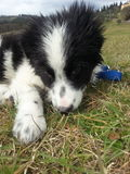在草的一只逗人喜爱的小狗 免版税库存照片
