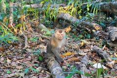 在草的一只猴子在森林里 库存照片