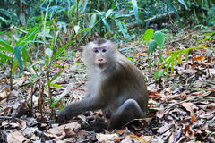 在草的一只猴子在森林里 库存图片