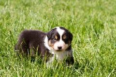 在草的一条好的小狗 免版税库存照片