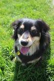 在草的一条狗 免版税库存图片