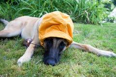 在草的一条狗 库存图片
