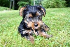在草的一条狗 免版税图库摄影